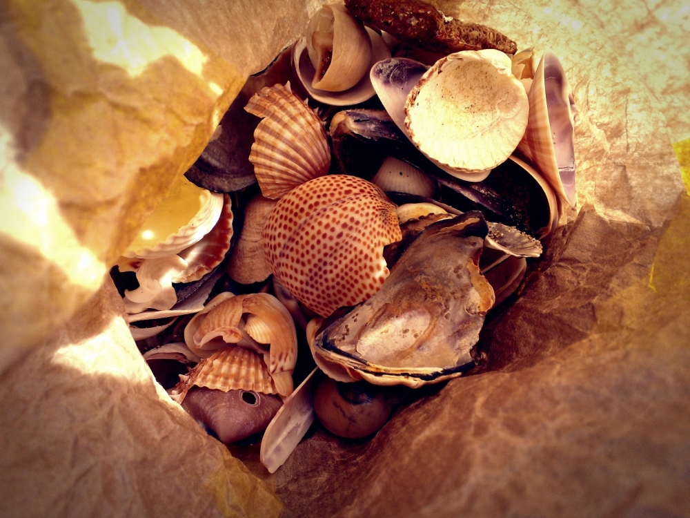 Shells from Canet Plage at the Mediterranean Sea