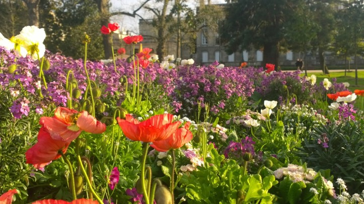 Bordeaux blooming for spring